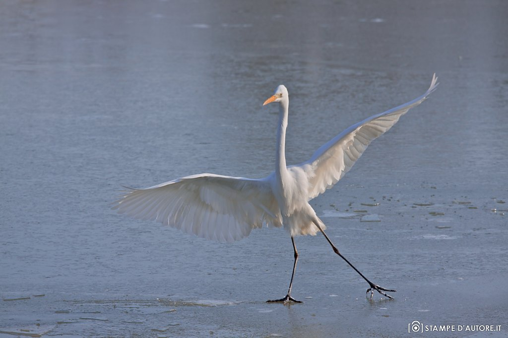 """Dancing on ice"