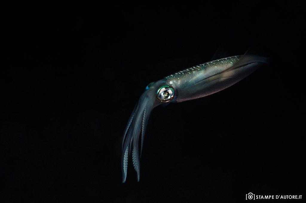 """""""Calamaro"""