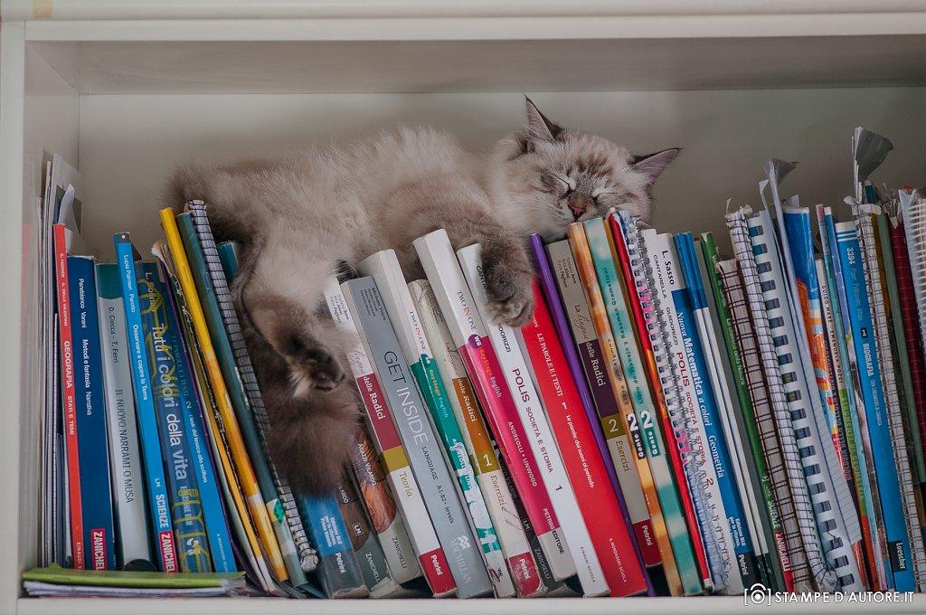 """""""Libreria"""